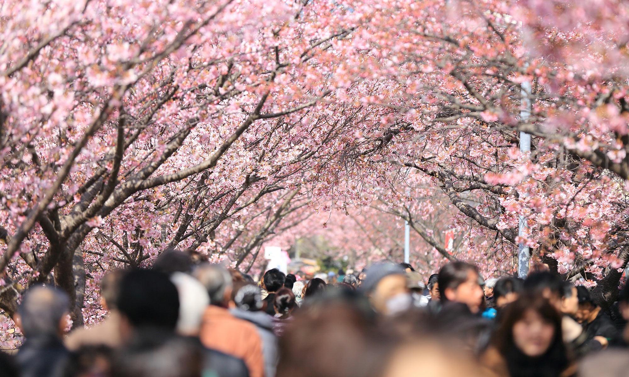 日文檢定|日本留學
